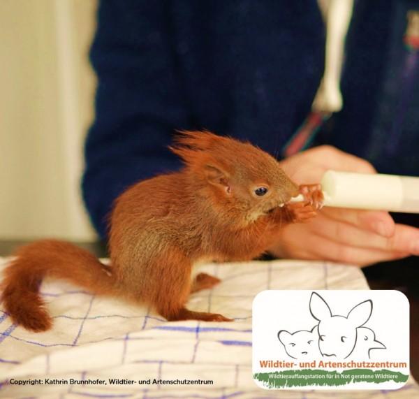 Wildtier-und-Artenschutzzentrum-Blog-Banner
